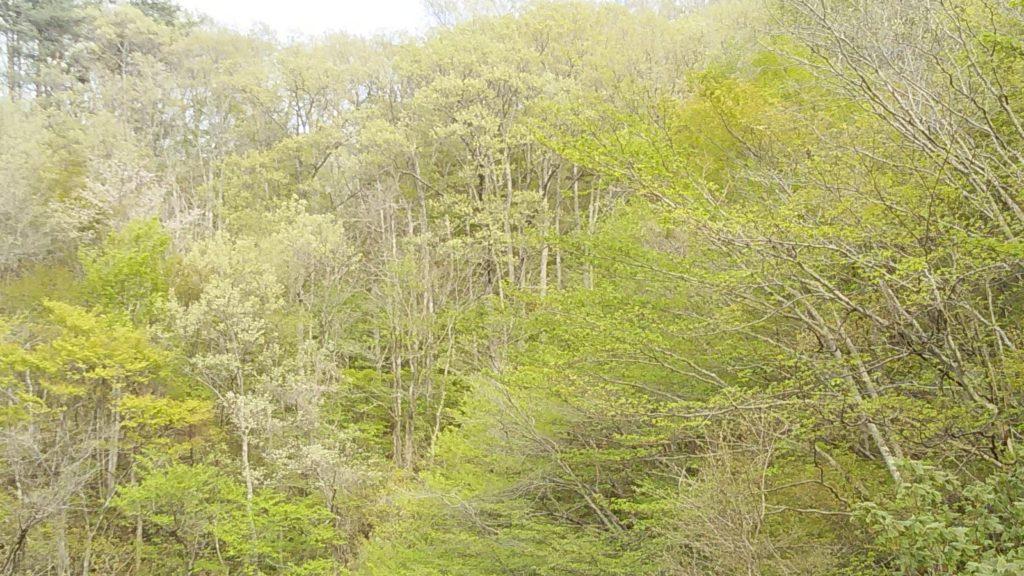 5月上旬の里山
